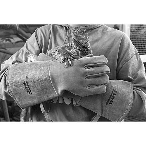 Gloves - Surgical, Exam & Handling