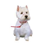 HALTI HEAD COLLAR #0