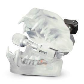 Model, feline clear dental