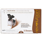 RXV REVOLUTION BROWN (11-20LBS) 3MONTH