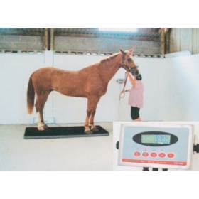 Scale,Equine platform scale
