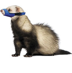 MUZZLES,QUICK MUZZLE FOR FERRETS-ONE SIZE FITS ALL
